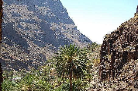 Palmen auf La Gomera