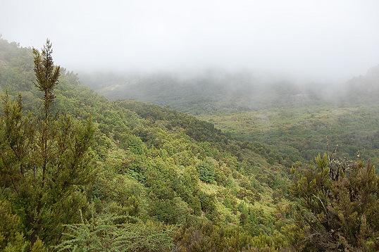 Lorbeerwald auf La Gomera